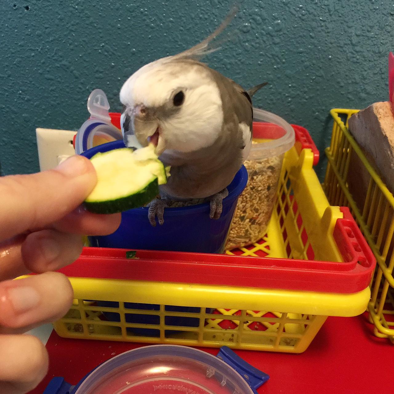 zucchiniround