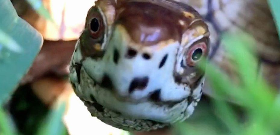 Box turtle selfie