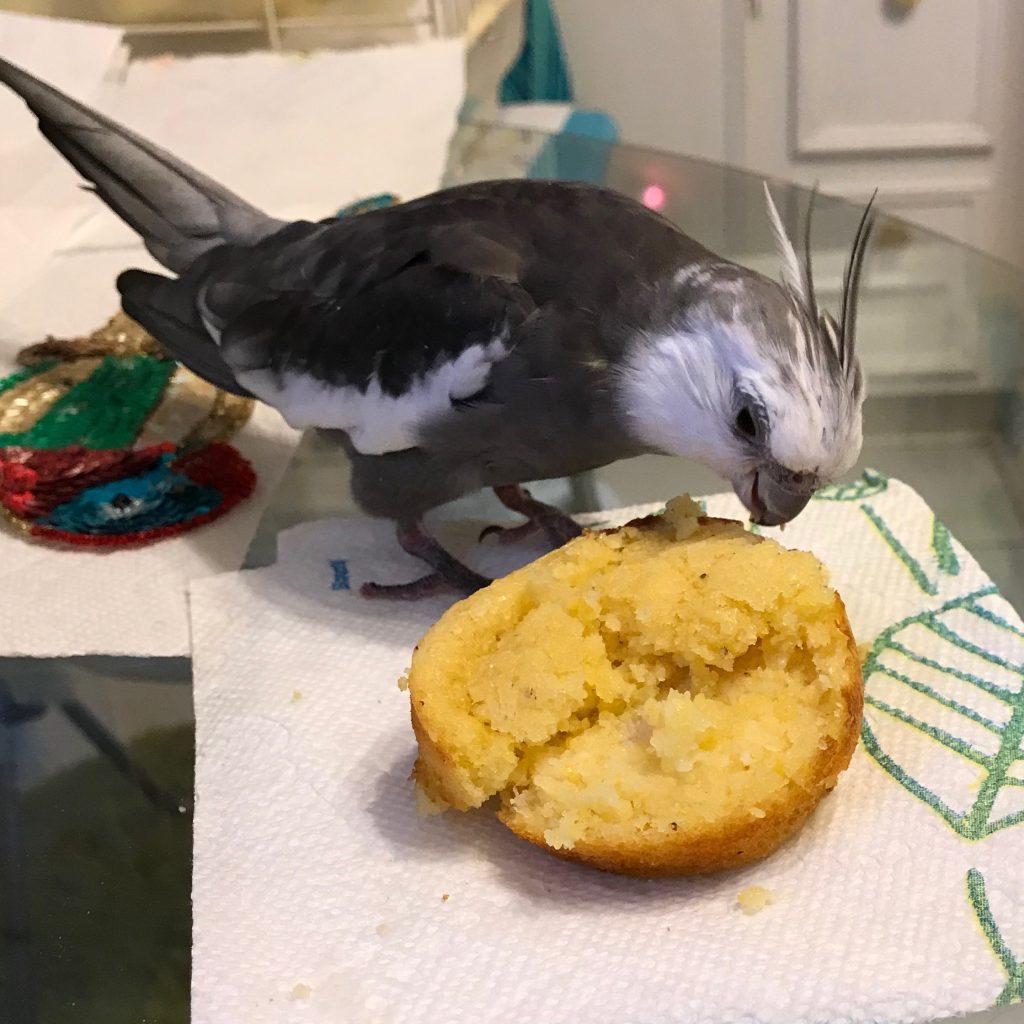 Cockatiel corn muffin 1