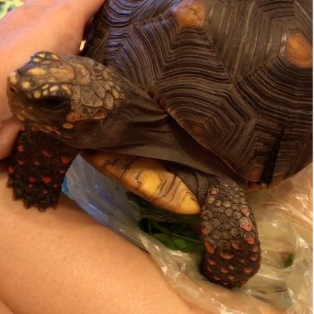 Tortoise sits on snacks