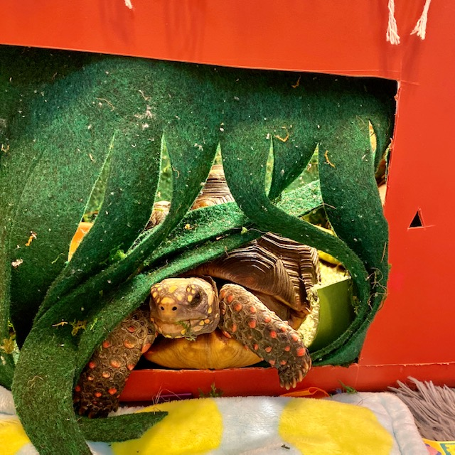 Tortoise habitat door