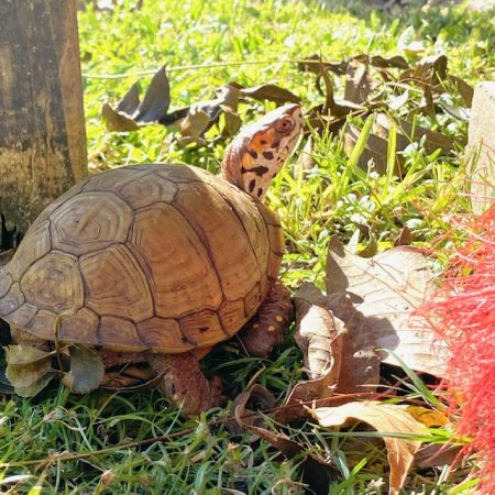 box turtle with broom