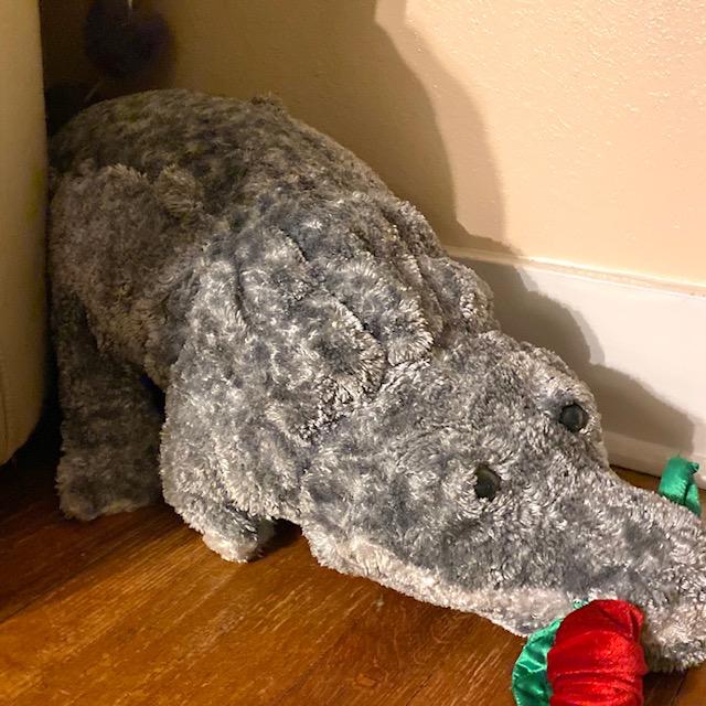 Redfoot tortoise underneath toy alligator