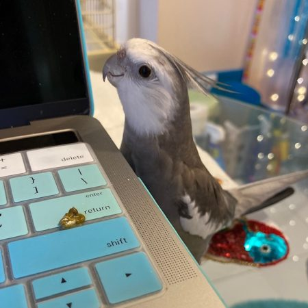 cockatiel poop laptop