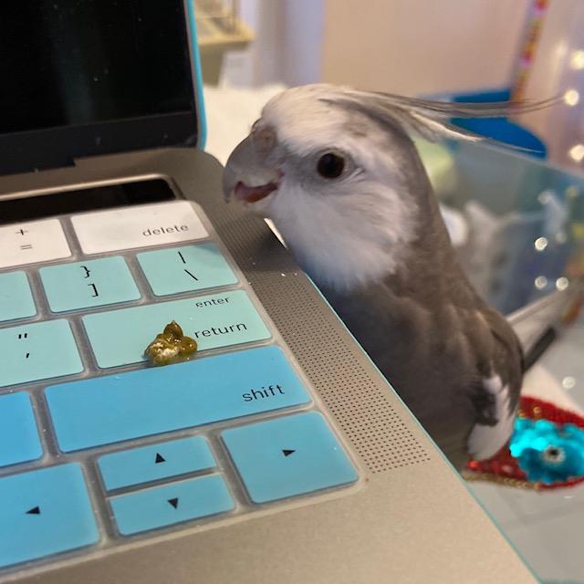 cockatiel poop on laptop keyboard
