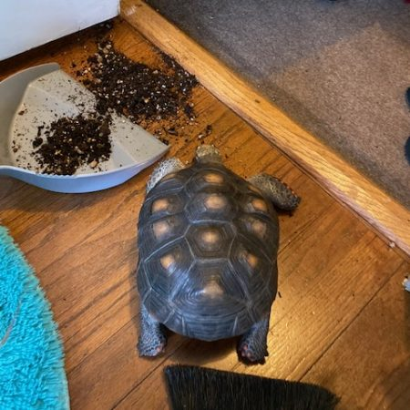 tortoise knocks over houseplant