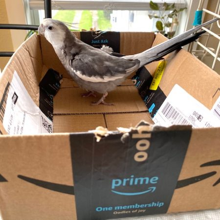 cockatiel nests in amazon box