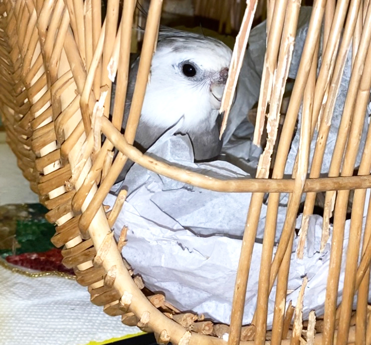 cockatiel wicker nest basket