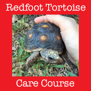 Redfoot Tortoise Care Course