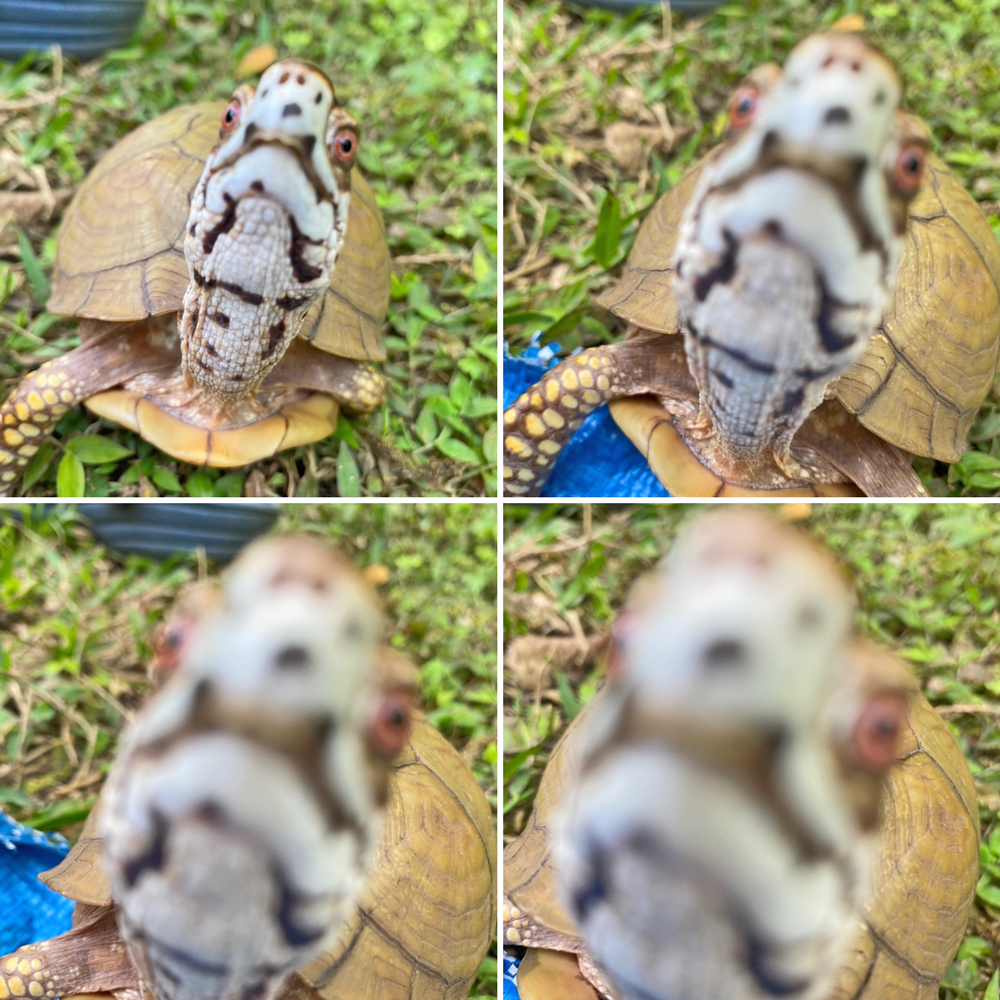 box turtle takes a selfie