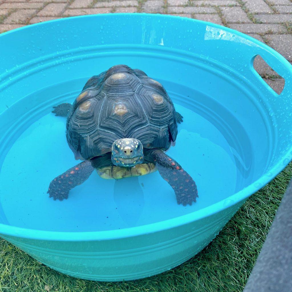 malti soaking tub