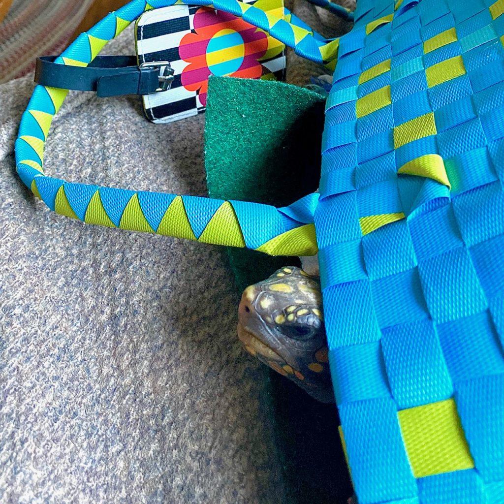 pet tortoise in carrier