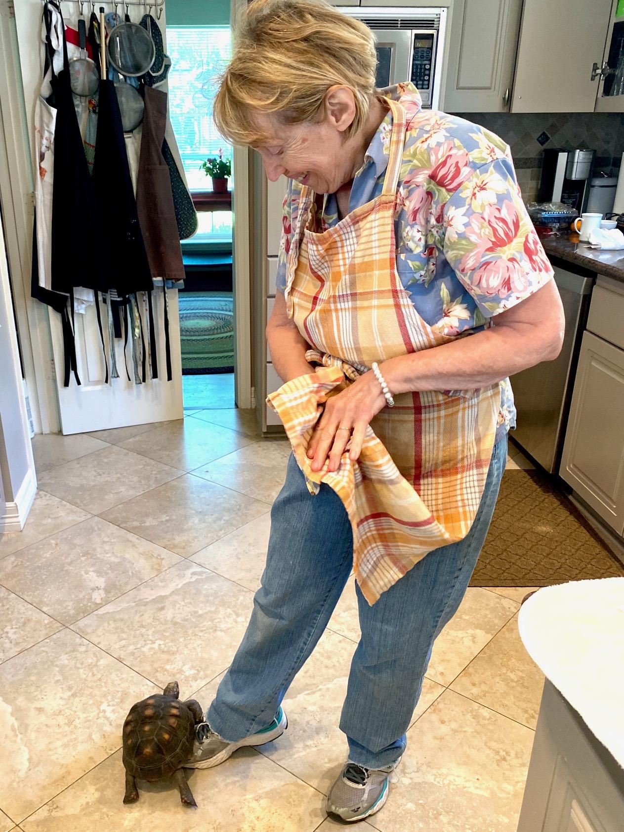 tortoise stands on grandma's leg