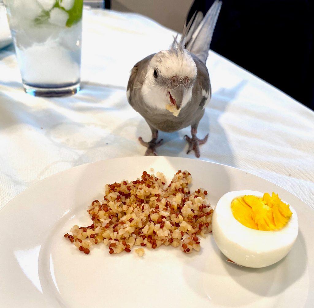 cockatiel snack plate