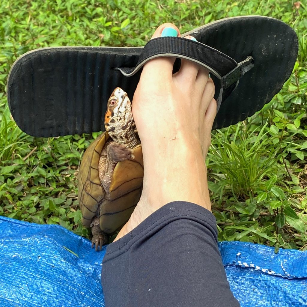 box turtle with sandal