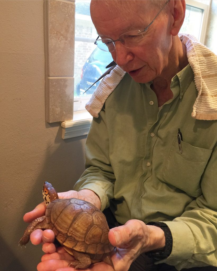 Grandpa holds rescued box turtle
