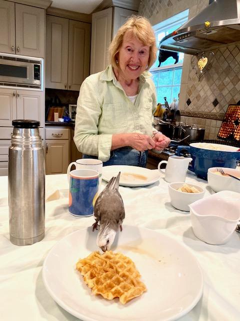 grandma cockatiel waffle