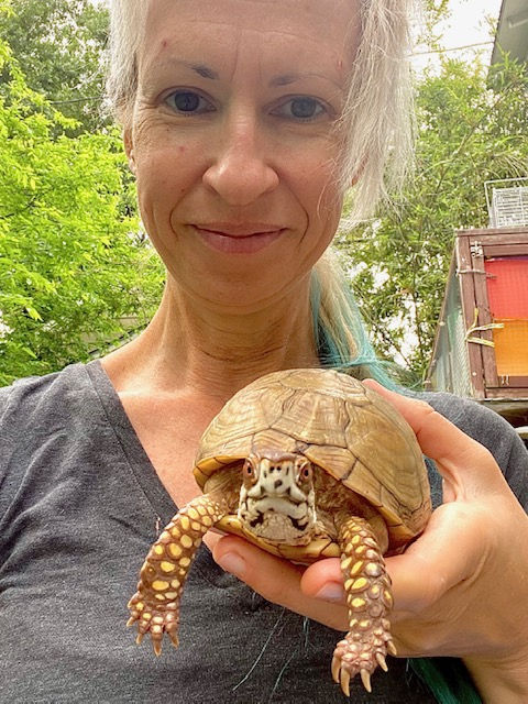 rescue mom with box turtle