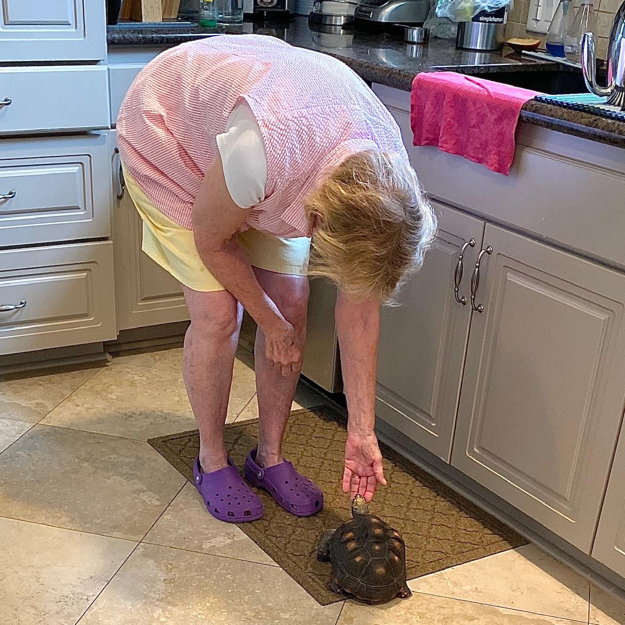 grandma pats tortoise