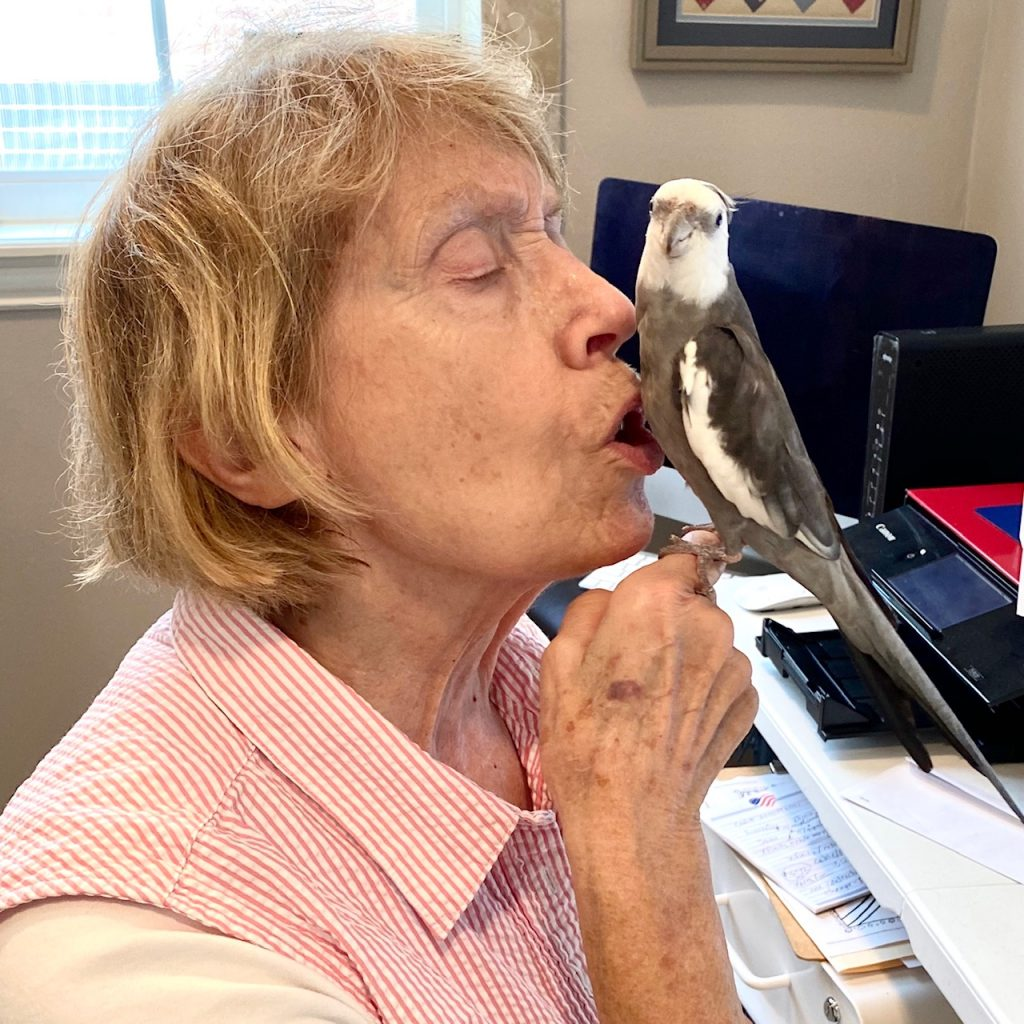 grandma kisses cockatiel belly