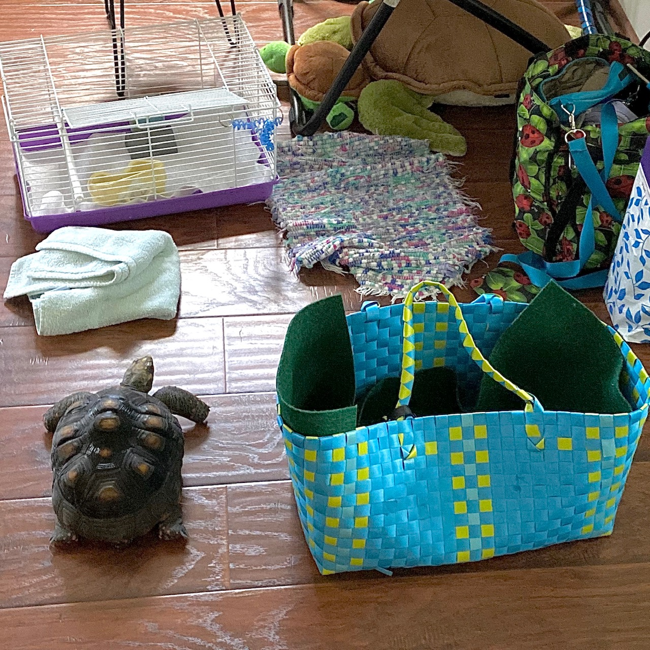 redfoot tortoise with carrier