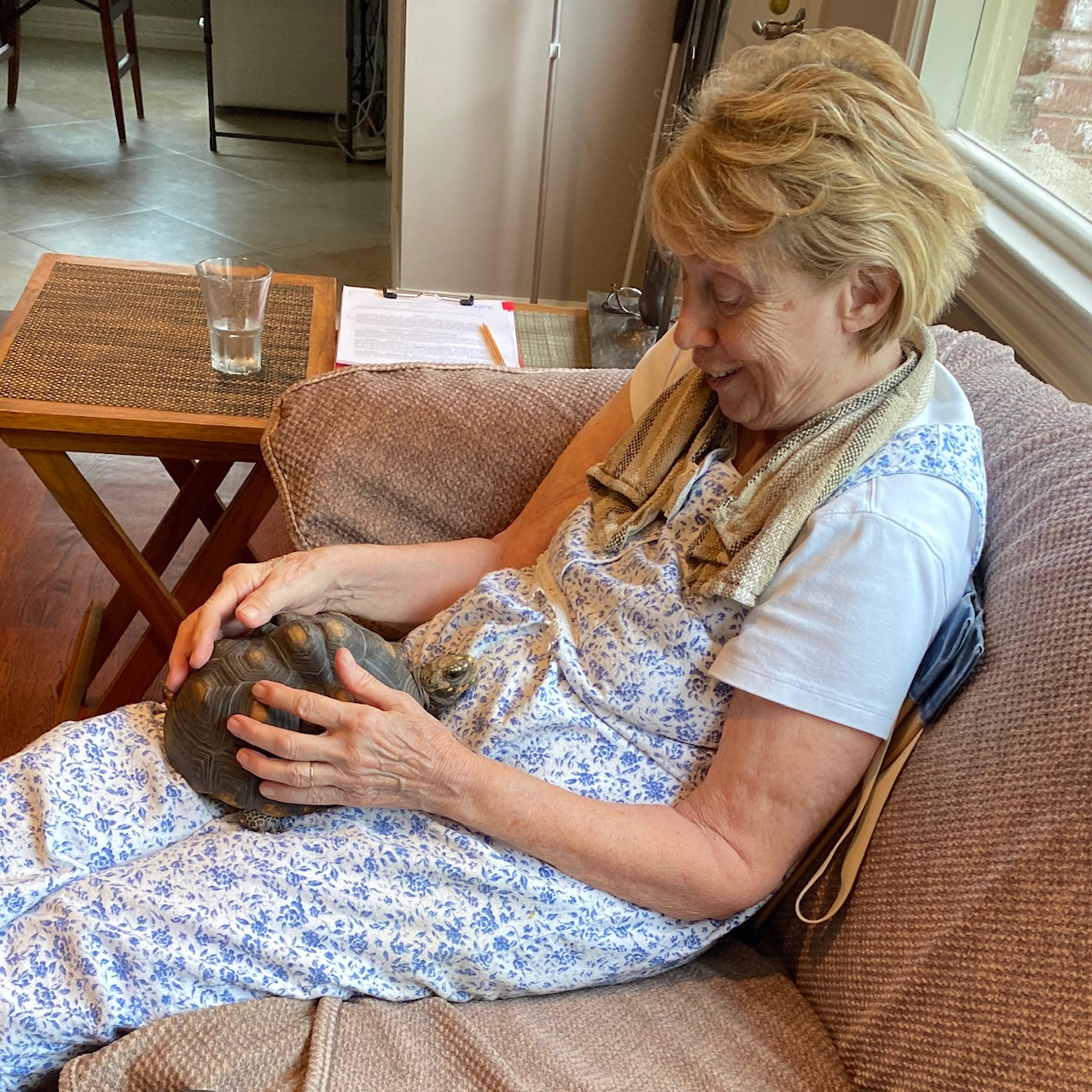 tortoise cuddles with grandma