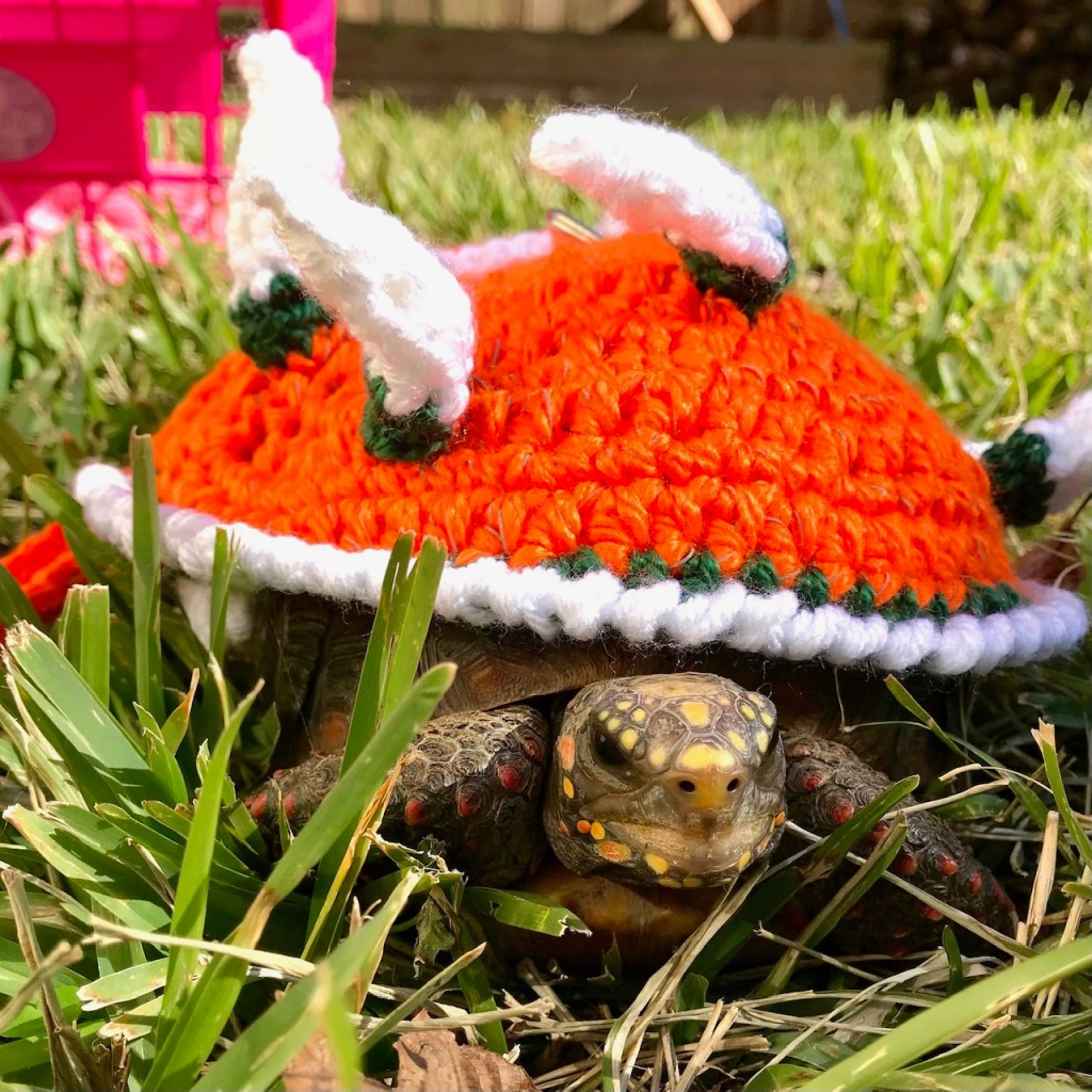 redfoot tortoise wears dinosaur costume