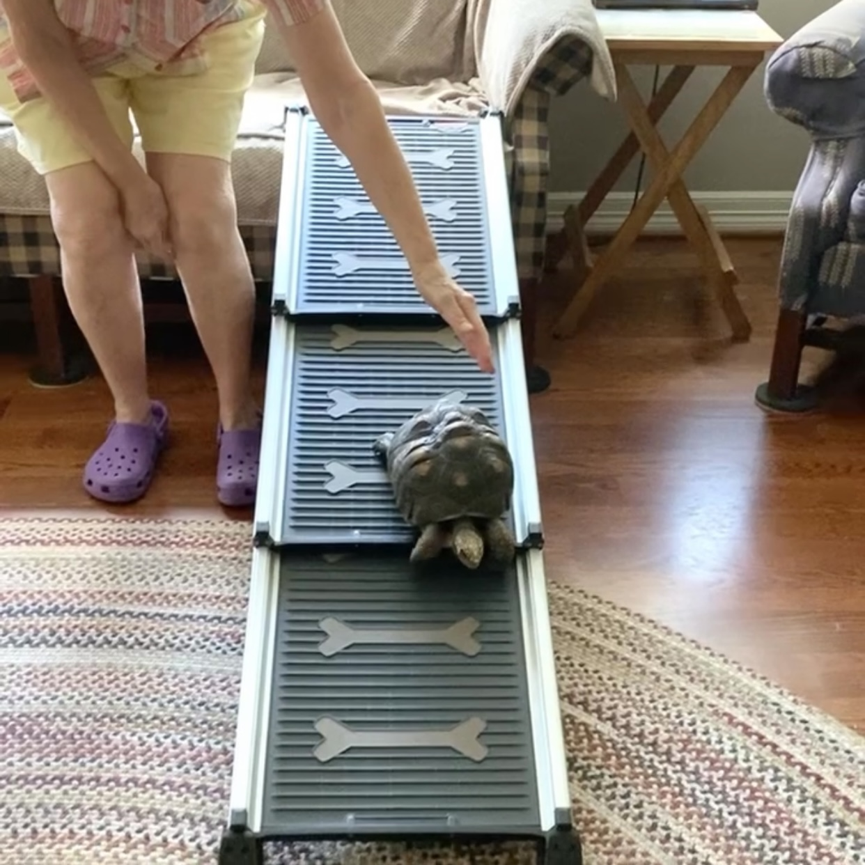 tortoise walks down dog ramp