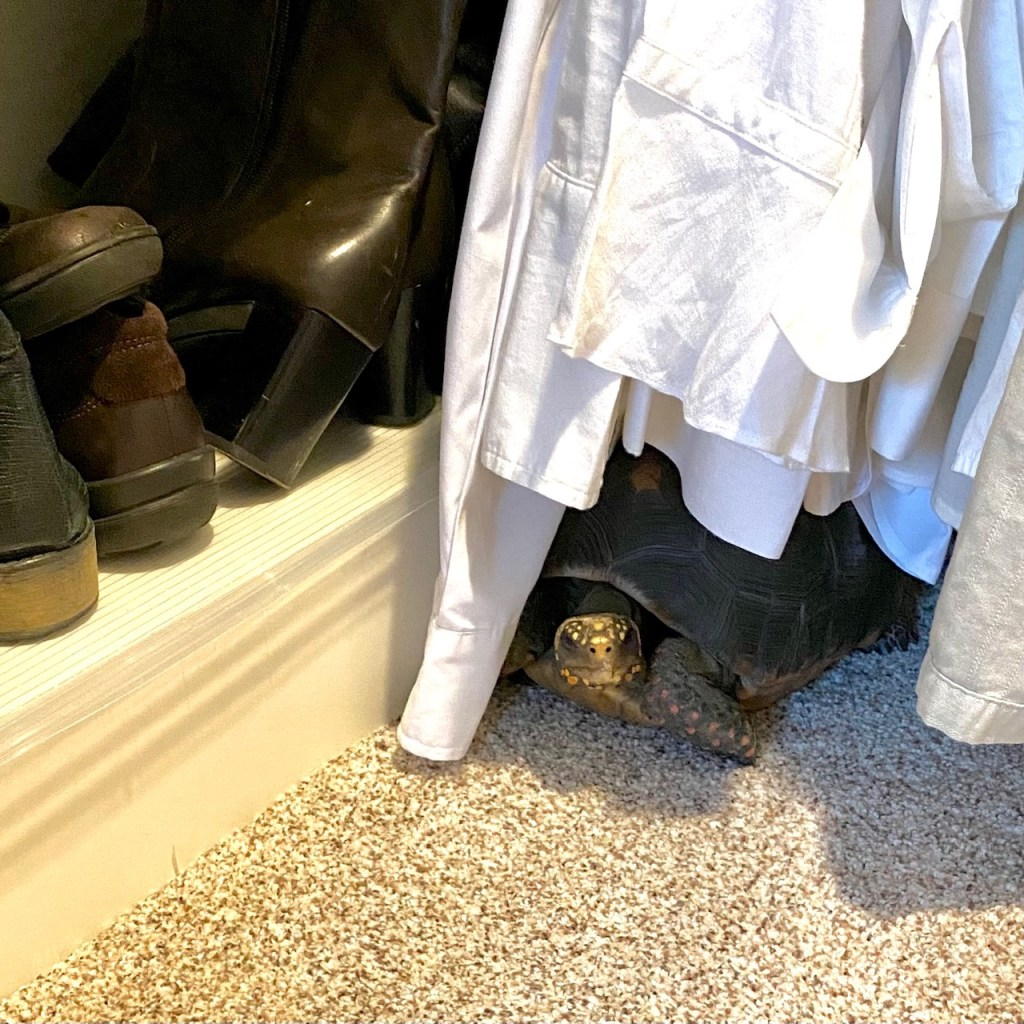 tortoise hiding in closet