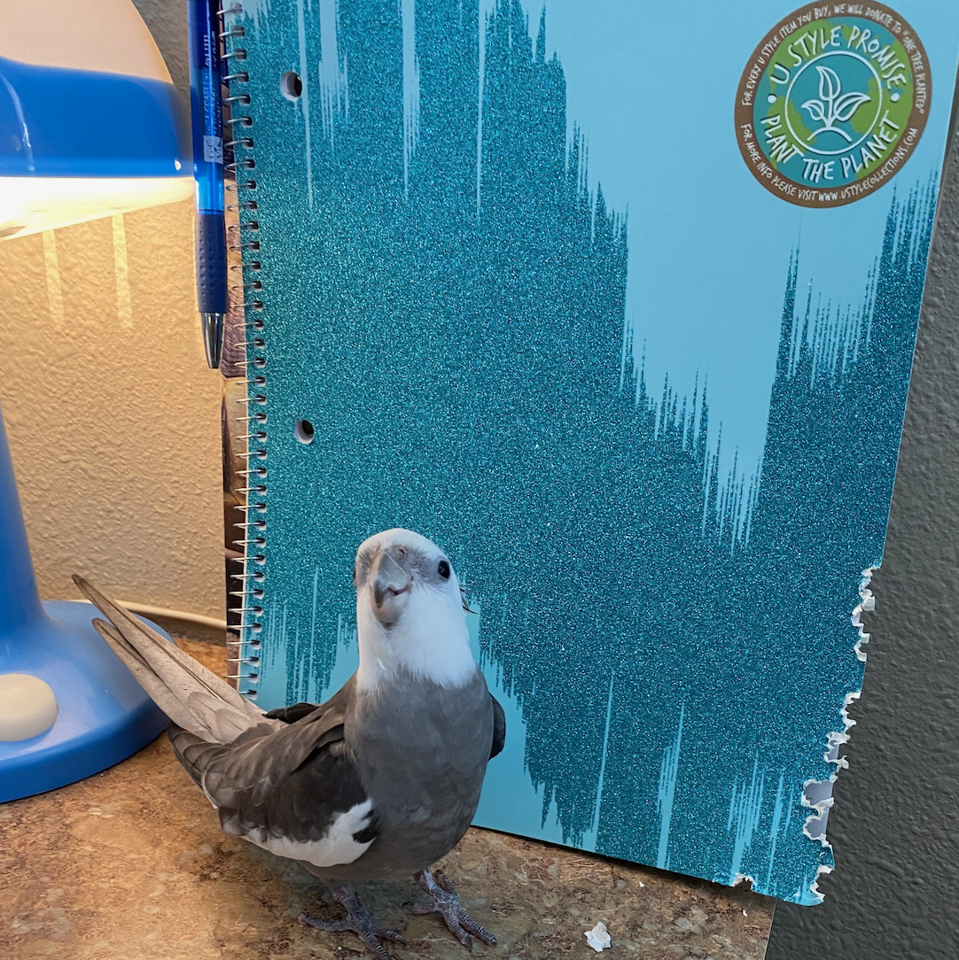 cockatiel shreds notebook