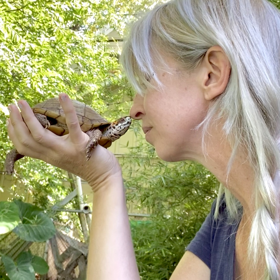 Shannon Cutts Bruce rescued box turtle