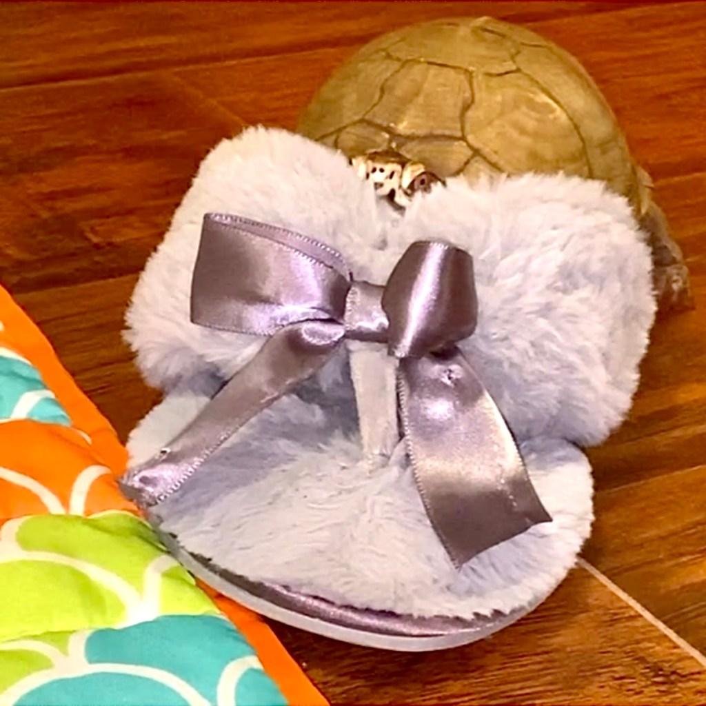 box turtle sits in slipper