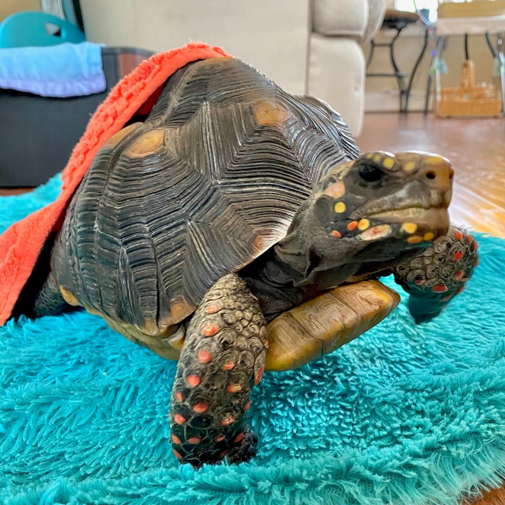 tortoise with blanket