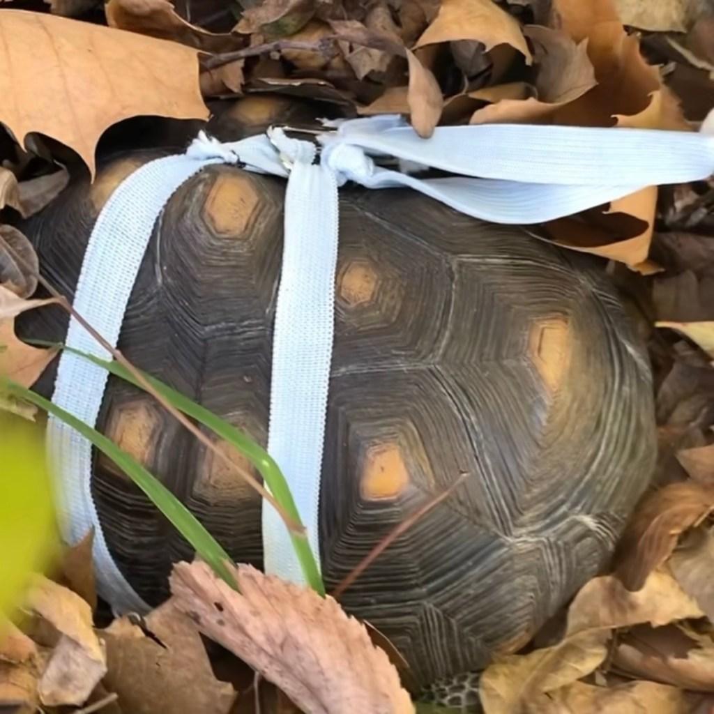 tortoise hiding in leaves