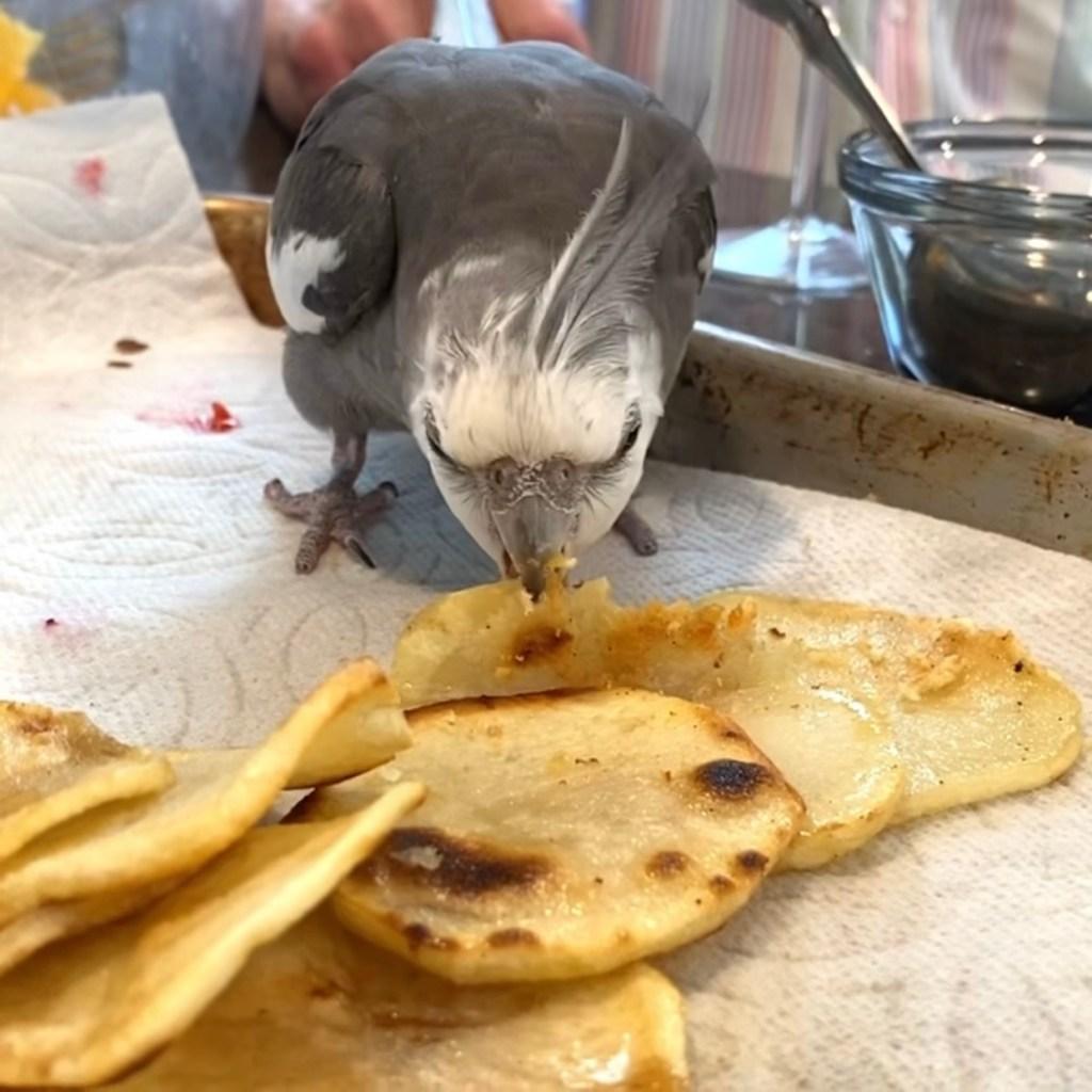 cockatiel eats potatoes