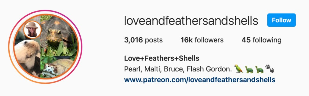 Love & Feathers & Shells on Instagram